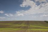 Romania  Danube River Delta  Bestepe  Farm Fields  Spring