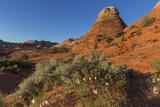 Layered Sandstone and Flowers  Vermillion Cliffs Wilderness  Arizona