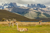 Chile  Patagonia  Torres del Paine NP Landscape with Guanacos