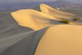 Mesquite Flat Sand Dunes at Dawn  Death Valley  California