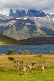 Chile  Patagonia  Torres del Paine NP Mountains and Guanacos