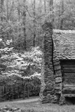 USA  Tennessee  Great Smoky Mountains National Park Abandoned Cabin