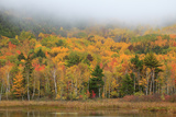 USA  Maine  Acadia National Park  Fog at Beaver Damn Pond in the Fall