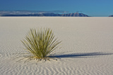 Sand Patterns  Yucca  White Sands Nm  Alamogordo  New Mexico