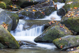 Tennessee  Great Smoky Mountains NP  Roaring Fork River