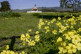 California  San Simeon  Yellow Wood Sorrel in Front of a School House