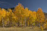 Autumn Colors  Boulder Mountains  Sawtooth National Forest  Idaho  USA