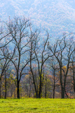 Tennessee  Great Smoky Mountains National Park  Cades Cove