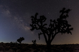 Joshua Trees Silhouetted by Starry Skies in Joshua Tree NP  California