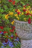 USA  Pennsylvania  Wayne  Chanticleer Garden Flower Scenic