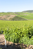 Europe  Portugal  Favaios  Vineyards