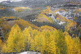 USA  Colorado  San Juan Mountains Autumn Snowfall on Forest