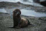 Galapagos Sea Lion Galapagos, Ecuador Papier Photo par Pete Oxford
