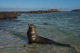 Galapagos Sea Lion Galapagos  Ecuador