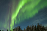 USA  Alaska Aurora Borealis over Forest