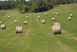 Minnesota Dakota County  Rolled Bales of Hay in a Green Field