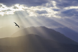 Washington  Seabeck Seagull and God Rays over the Olympic Mountains