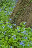 USA  Pennsylvania  Wayne  Chanticleer Garden Spring Scenic