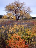 Custer SP  South Dakota Riparian Vegetation in Autumn Black Hills