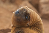 Ecuador  Galapagos National Park Sea Lion Close-up