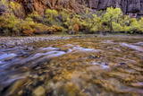 USA  Utah  Zion National Park Stream in Autumn Scenic