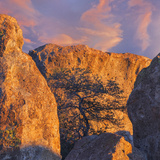New Mexico  City of Rocks State Park Sunset on Boulders and Tree