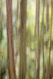 USA  Washington State  San Juan Islands Abstract Woodland Scene