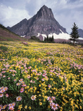 USA  Montana  Glacier National Park  Wildflowers and a Mountain Peak