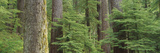 Hemlock and Douglas Fir in the Sol Duc Area of Olympic NP  Washington