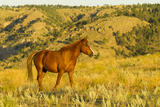 USA  South Dakota  Wild Horse Sanctuary Wild Horse in Field