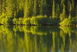Close Up  Reflection  Reflection Lake  Mount Rainier NP  Washington