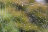USA  WA Raindrops Decorate Spider Web Fall Color Backdrop