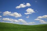 USA  Washington State  Palouse Green Wheat Field Landscape