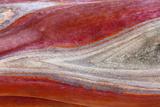 USA  California  Mount Diablo State Park Manzanita Wood Detail