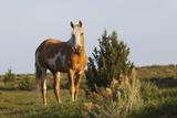 Wild Horse  Steens Mountains