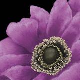 Brilliant Blooms II