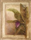 Plantano En Flor II