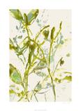 Watercolor Leaves II