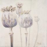 Poppy Seeds II