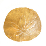 Gold Sand Dollar II (gold foil)