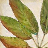 Organic IV (crop)