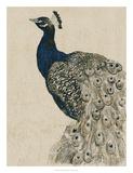 Textured Peacock II