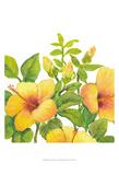 Watercolor Hibiscus I