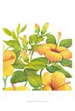 Watercolor Hibiscus II