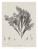 Charcoal & Linen Seaweed V