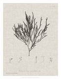 Charcoal & Linen Seaweed IV