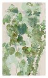 Watercolor Eucalyptus II