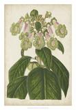 Foxglove Botanical
