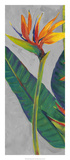 Bird of Paradise Triptych I