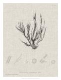 Charcoal & Linen Seaweed VI